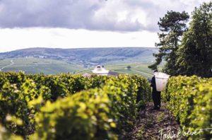 Pascal Jolivet. Een van de vele mooie wijnhuizen van de Sancerre. Hier een lijstje met de beste wijnhuizen.
